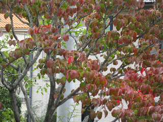 柏の秋2014 022s.jpg