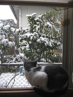 雪と 005s.jpg